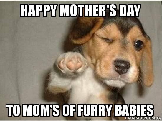 happy-mothers-day-to-moms-of-furry-babies
